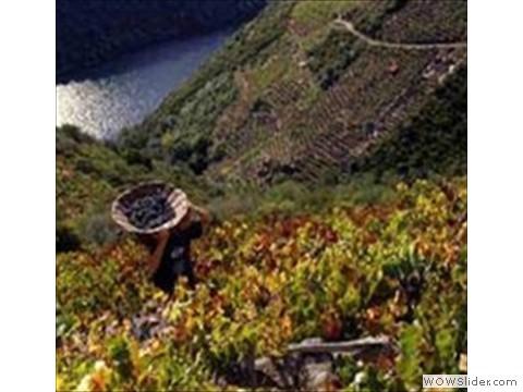 Vines rio sil