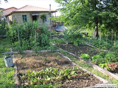 Veggie garden / Huerta